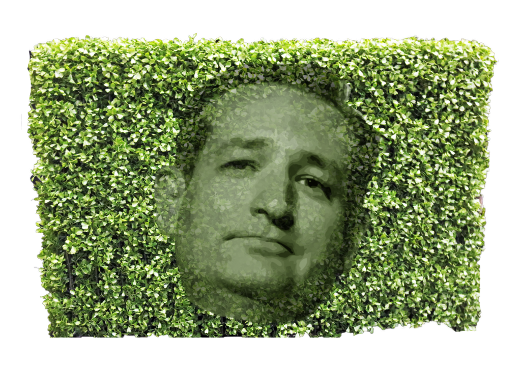 cruz hedge